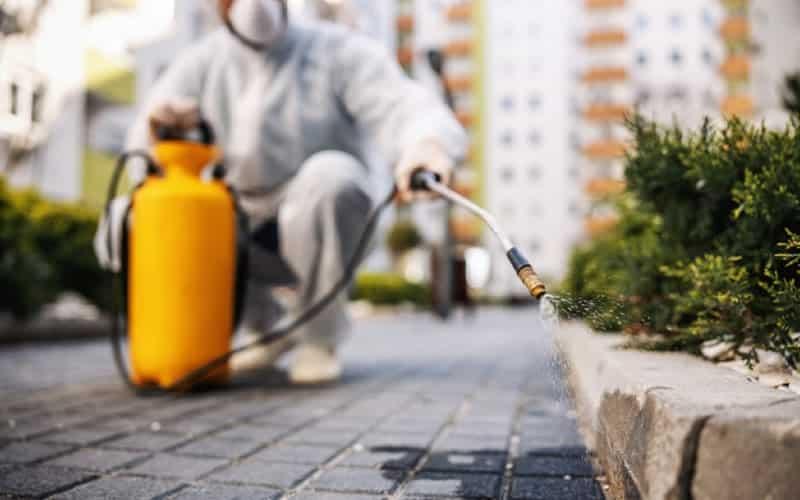 Como acabar com as formigas em sua casa?